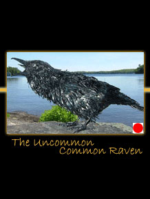 the uncommon common raven metal sculpture by canadian sculptor hilary clark cole