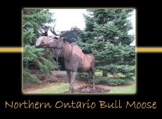 northern ontario bull moose steel sculpture by canadian sculptor hilary clark cole